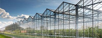 Садоводство и сельское хозяйство